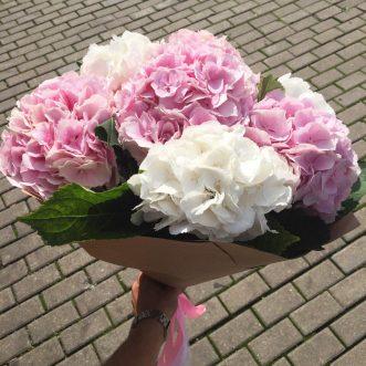 7 розовых и белых гортензий