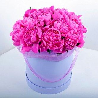 23 розовых пиона в коробке