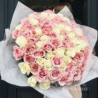 101 розовая и белая роза (Premium)