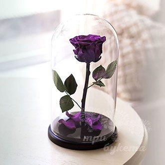 Фиолетовая роза в колбе 26 см